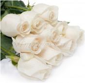 Роза Венделла белая, 60 см.