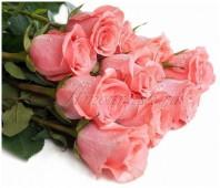 Роза Амстердам розовая, 40 см.