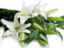 Лилия белая, 90 см.