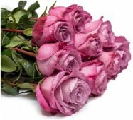 Роза Моди Блюз сиреневая, 50 см.