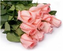 Роза Хермоза розовая, 60 см.