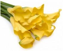 Каллы желтые, 40 см.