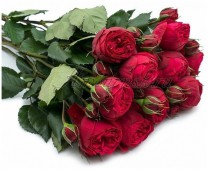 Пионовидные розы David Austin, 50 см.
